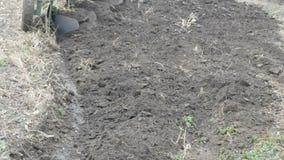 Il trattore d'acciaio solca la terra dell'aratro nella fine recente di autunno sulla vista video d archivio