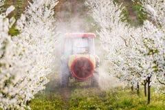 Il trattore spruzza l'insetticida nel campo del meleto Fotografia Stock