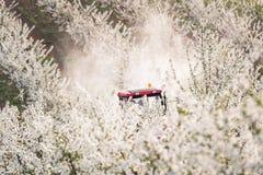 Il trattore spruzza l'insetticida nel campo del meleto Fotografie Stock