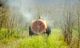 Il trattore spruzza l'insetticida nel frutteto di ciliegia Fotografia Stock