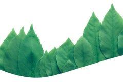 Il treeline della foresta fatto delle foglie verdi su fondo luminoso ha isolato il bianco fotografie stock