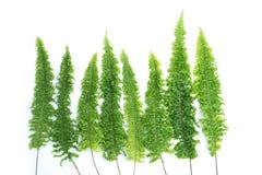 il treeline della foresta ha fatto le foglie verdi fotografia stock libera da diritti