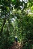 Il Trekker cammina in giungle Fotografia Stock