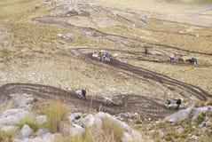 Il treno del mulo, trasportante carica in alte montagne Fotografia Stock Libera da Diritti