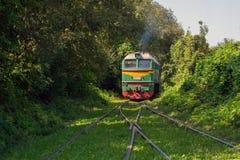 Il treno si avvicina alla forcella ferroviaria nella foresta fotografia stock libera da diritti