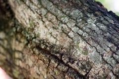 Il tronco Fotografie Stock Libere da Diritti