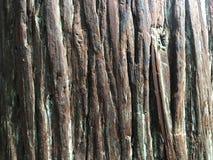 Il tronco Immagini Stock
