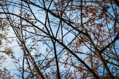 Il tronco, arto ed il cielo nell'orario invernale Fotografie Stock Libere da Diritti