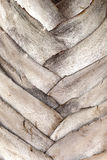 Il tronco della palma Fotografia Stock
