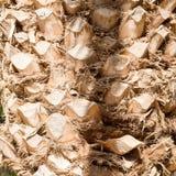 Il tronco della palma Fotografia Stock Libera da Diritti