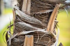 Il tronco delle palme Fotografia Stock Libera da Diritti