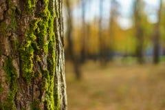Il tronco di albero coperto di muschio Fotografia Stock Libera da Diritti