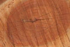 Il tronco di albero segato ha strutturato il fondo fotografie stock