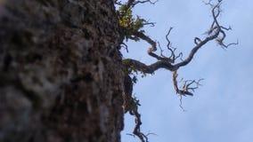 Il tronco di grande albero fotografie stock libere da diritti