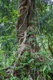 Il tronco di un albero insolito in Tailandia Fotografia Stock