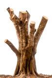 Il tronco di un albero sul fondo dell'isolato immagine stock libera da diritti