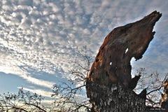 Il tronco e più di albero asciutto si appanna il cielo blu bianco del cotone Immagini Stock Libere da Diritti