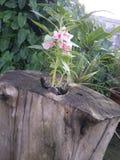 Il tronco ed il fiore fotografie stock