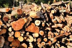 Il tronco ha ridotto la struttura in una foresta spagnola fotografie stock libere da diritti