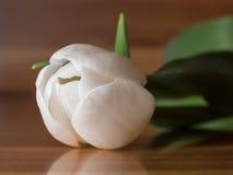 Il tulipano bianco si trova su una tavola e su un fondo di legno Fotografia Stock Libera da Diritti