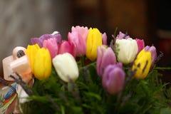 Il tulipano colorato bella porpora fiorisce il fondo Fotografie Stock Libere da Diritti