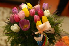Il tulipano colorato bella porpora fiorisce il fondo Fotografia Stock