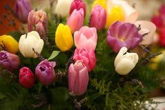 Il tulipano colorato bella porpora fiorisce il fondo Immagine Stock