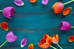 Il tulipano fiorisce il mazzo ordinato nella forma ovale immagine stock libera da diritti