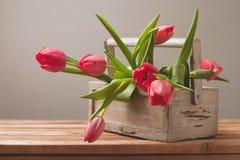 Il tulipano fiorisce in scatola di legno per la celebrazione di festa della Mamma Immagine Stock Libera da Diritti