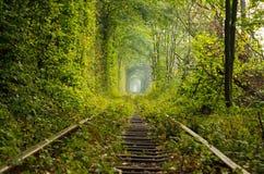 Il tunnel dell'amore sulla ferrovia Fotografia Stock