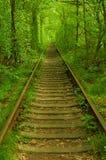 Il tunnel naturale costituito dagli alberi in Ucraina, Klevan ha chiamato come botte Fotografie Stock