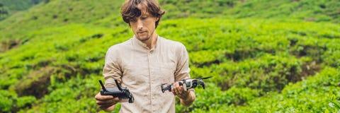 Il turista degli uomini prova a lanciare il fuco ad una piantagione di tè Le foglie di tè selezionate e fresche naturali in tè co Immagine Stock