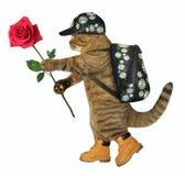 Il turista del gatto con è aumentato fotografia stock
