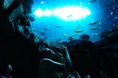 Il turista felice prende le foto dell'acquario, Hong Kong Ocean Park fotografia stock libera da diritti