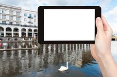il turista fotografa il cigno nel lago Alster a Amburgo Fotografia Stock