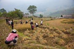 Il turista fotografa gli agricoltori vietnamiti del nord che lavorano nel loro fi Fotografia Stock