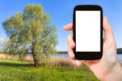 il turista fotografa l'albero di salice in Ucraina Immagine Stock