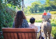 Il turista viene visita e guida l'elefante Fotografia Stock Libera da Diritti