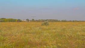 Il UAV si siede nell'erba, atterrante il UAV nel campo archivi video