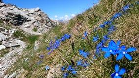 Il Valais svizzero Fotografia Stock
