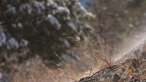 Il vapore aumenta dalla terra umida mentre la neve si fonde dopo una tempesta dell'inverno immagini stock