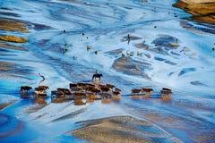 Il vaquero ed il bestiame in fiume Fotografia Stock Libera da Diritti