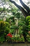 Il vario genere di pianta, di albero dei bonsai e di fiore ha sistemato come una piccole giungla e vendita dal fiorista Jakarta c immagini stock libere da diritti