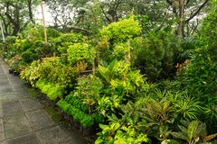 Il vario genere di pianta e di fiore ha sistemato come una piccole giungla e vendita dal fiorista Jakarta contenuta foto Indonesi immagini stock