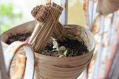 Il vaso della pianta verde in Tailandia Fotografia Stock
