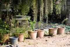 Il vaso delle piante Fotografia Stock