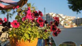 Il vaso di fiore rosso delle petunie in sospensione sta ondeggiando da vento, in città, costruzione moderna video d archivio