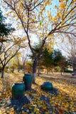 Il vaso e le foglie cadute in autunno parcheggiano Fotografia Stock