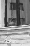 Il vaso nella finestra Fotografia Stock Libera da Diritti