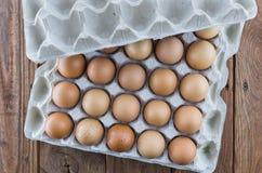Il vassoio dell'uovo del cartone con il pollo marrone eggs Immagini Stock